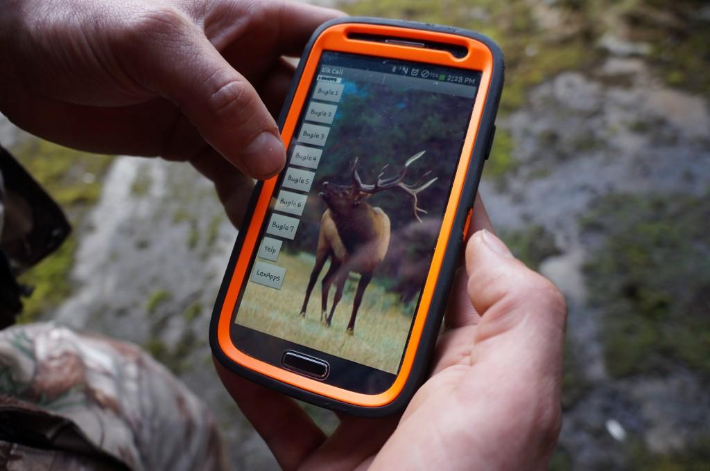 Elk Photo 4